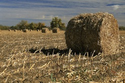 corn_stover03 Photo: USDOE-NREL