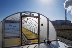 Bioprocess Algae's Growth System