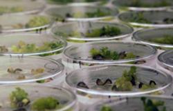 Plant Genomics SGI