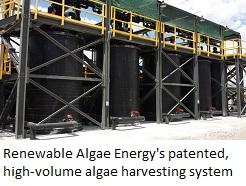 RAE algae1