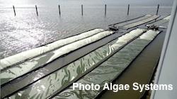 Algae Systems Daphne project2