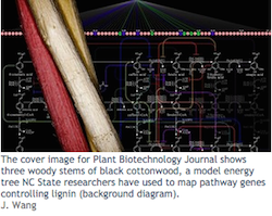 NC State lignin research