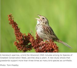 UW-Madison biofuels and bird study