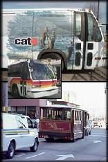 raleghbuses.jpg