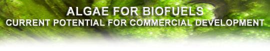 garbrook-algaeforbiofuels