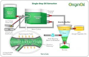 originoil-process-10a