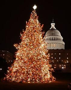 CapitolChristmasTree2