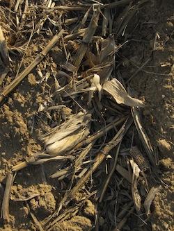 Corn Stover: Biomass Photo Joanna Schroeder