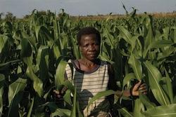 2013_01_malawi_09 Photo UN