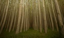 EnviraCarbon Hybrid Trees
