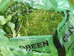 grass clippings photo scotts