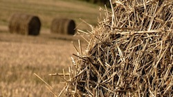 Wheat Straw credit: Flickr Creative Commons: