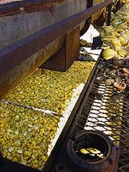 Citris peel waste for ethanol