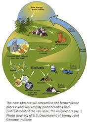 Bioenergy chain