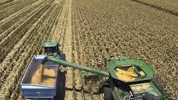 2013 corn harvest