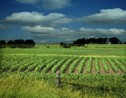 Iowa-Farm