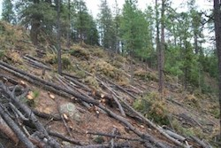 forest residue