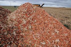 corn-cobs