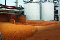 distillers_grains_ Photo US Grains Council