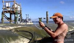Algae Systems Daphne project