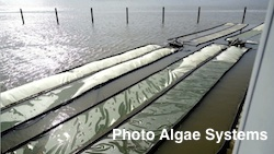 Algae Systems Daphne project2