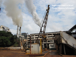Sugarcane Plant in Brazil Photo Joanna Schroeder