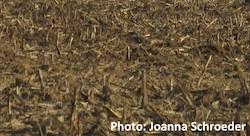 Biomass Photo Joanna Schroeder