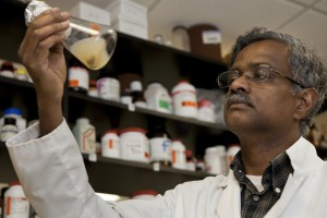 UF/IAFS Horticulture Professor Balasubramanian Rathinasabapathi, seen here working in his Gainesville lab, has found what could be a big key to converting microalgae to biofuel. He and former doctoral student Elton Gonçalves found that the transcription factor ROC40 helps control lipid production when the algal cells were starved of nitrogen. Credit: Tyler Jones, UF/IFAS photography.