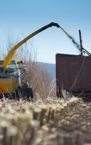 Biomass energy from crops such as shrub willow could provide the social, economic and ecological drivers for a sustainable rural renaissance in the Northeast, researchers say. Photo Credit Penn State.