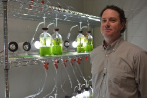 Dr. Timothy Devarenne studies the biofuel properties of a common green microalga called Botryococcus braunii in his lab at Texas A&M University. Photo Credit: Kathleen Phillips