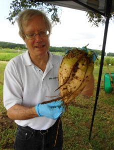 Example of energy beet held by Robert Kozak, President, Atlantic Biomass.