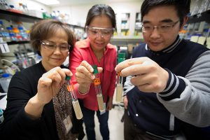 NREL scientists Pin-Ching Maness (left), Katherine J. Chou and Wei Xiong hold test tubes containing the bacterium Clostridium thermocellum. (Photo by Amy Glickson / NREL)